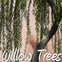 Willow Trees 3D Models designfera
