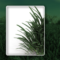 Realistic grass image 1