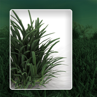 Realistic grass image 3