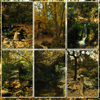 Spanish Forest Vol 2 image 1