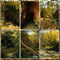 Spanish Forest Vol 2 image 2