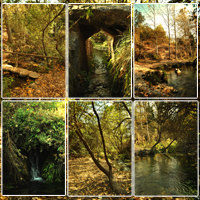 Spanish Forest Vol 2 image 3