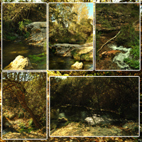 Spanish Forest Vol 2 image 4