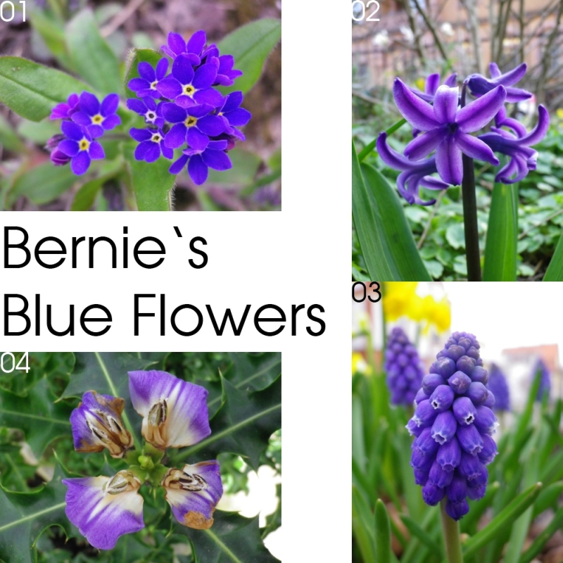 Bernies Blue Flowers