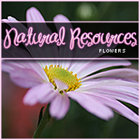Natural Resources: Flowers 2D Graphics Merchant Resources Sveva