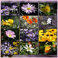 Natural Resources: Flowers image 2