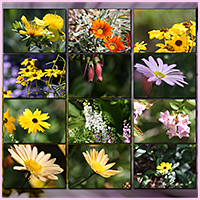Natural Resources: Flowers image 4