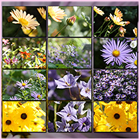 Natural Resources: Flowers image 5