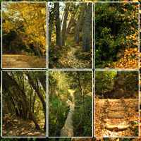 Spanish Forest Vol 3 image 1