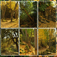 Spanish Forest Vol 3 image 2
