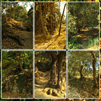 Spanish Forest Vol 3 image 3