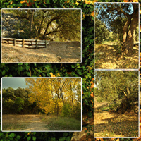 Spanish Forest Vol 3 image 4