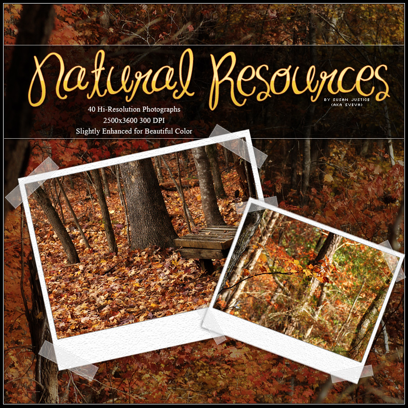 Natural Resources: Autumn Forest