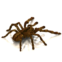 Tarantula (for Poser) image 1