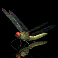 Dragon Fly (for Poser) by VanishingPoint