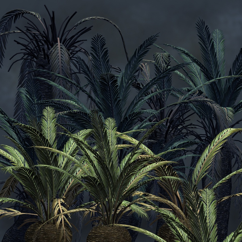 Cycads2012 DR