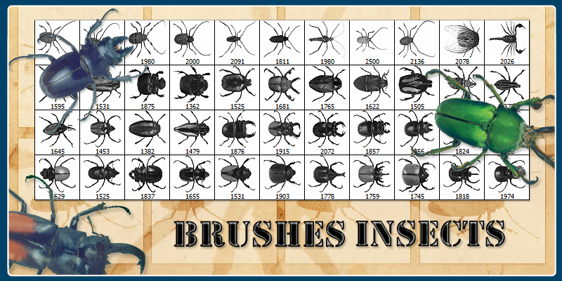Brushes - Insects