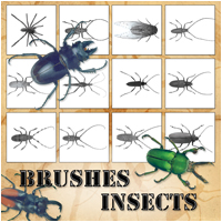 Brushes - Insects  Atenais