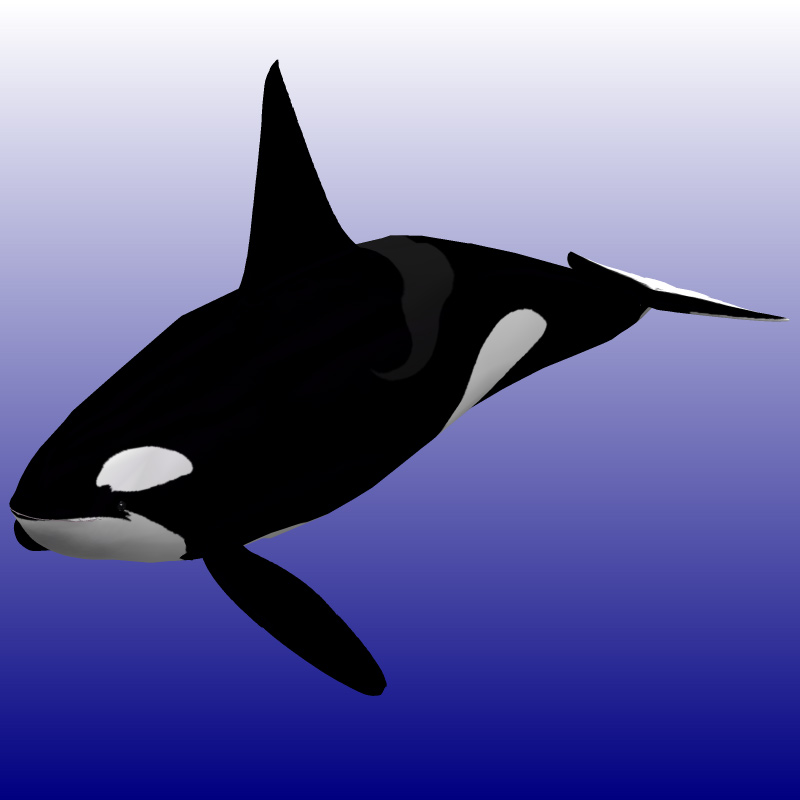 Killer Whale Male (for Poser)