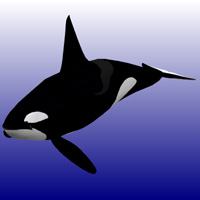 Killer Whale Male (for Poser)  Digimation_ModelBank