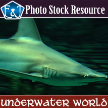 Underwater World 2D Graphics Merchant Resources EmmaAndJordi