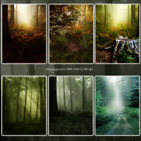 FS Best of Forest Backgrounds image 1