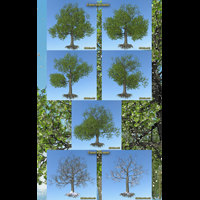 Flinks Tree 4 -seasons- image 1