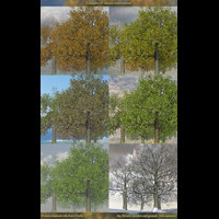 Flinks Tree 4 -seasons- image 5