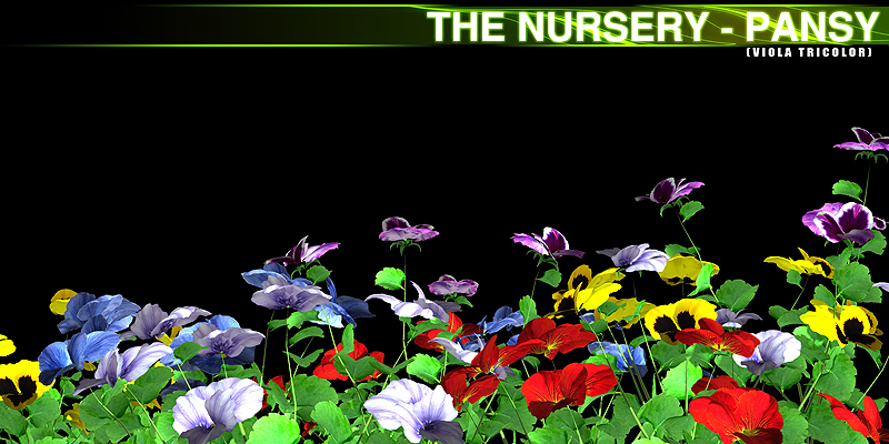 The Nursery - Pansy