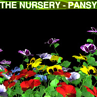 The Nursery - Pansy 3D Models designfera