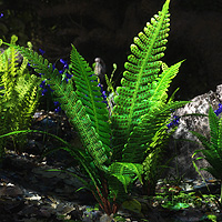 Blechnum spicant  - The Hard Fern 3D Models martinjfrost