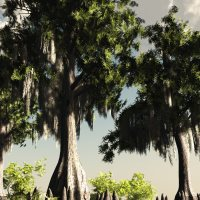 Bald Cypress DR 3D Models Dinoraul