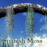 Spanish Moss for Vue 3D Models martinjfrost