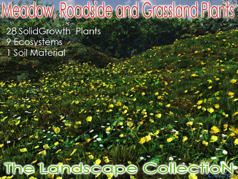 Meadow Roadside and Grassland Plants