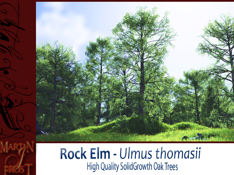 Rock Elm Bundle