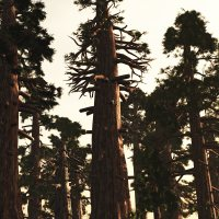 Sequoiadendron DR 3D Models Dinoraul