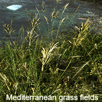 Mediterranean grass fields 3D Models Software Kleonas