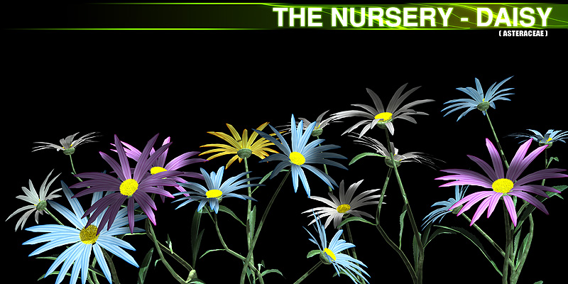 The Nursery - Daisy