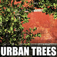 Urban Trees 3D Models designfera
