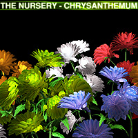 The Nursery - Chrysanthemum 3D Models designfera