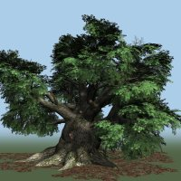 Oak DR 3D Models Dinoraul