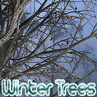 Winter Trees 3D Models designfera