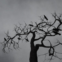 Meipes Crows image 2