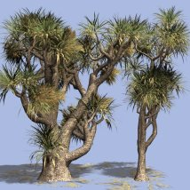 Cabbage Tree DR 3D Models Dinoraul