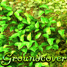 Groundcover by designfera