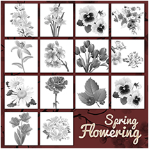 PB - Spring Flowering 2D Graphics Atenais