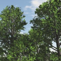 English Elm DR 3D Models Dinoraul