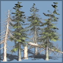 Grand Fir DR 3D Models Dinoraul